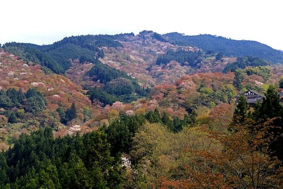 Yoshino: view from yoshimizu shrine -- note the trees near the peak are still pink and in full bloom