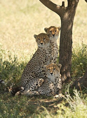 Africa Veterans Safaris - Day Tours