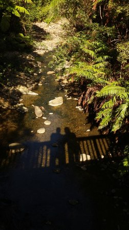 RAPAURA Watergardens : Exploring the streams, bridges and waterfalls.