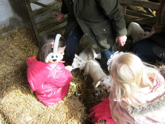 Berrys Farm Shop & Cafe: Feeding the lambs