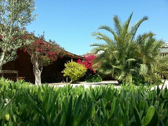 El Rancho: courtyard to cabins