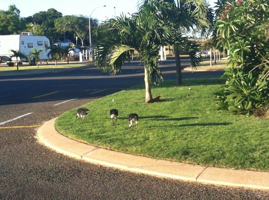 The Cove Holiday Village: birds on the lawn of the Cove grounds