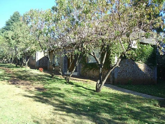 Aloes Guesthouse : Fruit trees