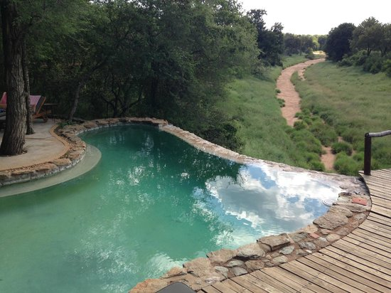 Garonga Safari Camp: Pool