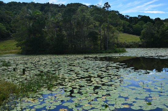 Byron Bay Farmstay: The lake