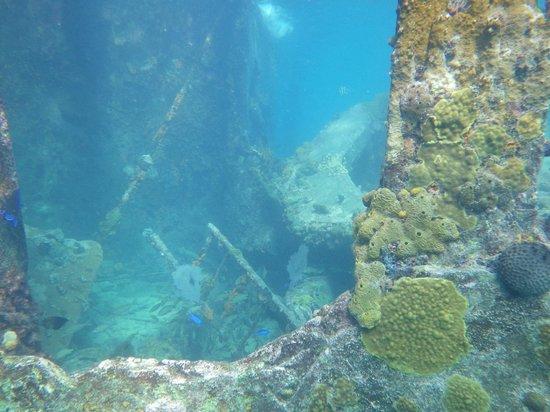 Bimini Undersea : a look inside the Sapona