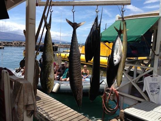 Aerial Sport Fishing Charters: Catch of the day (Kai Akua)
