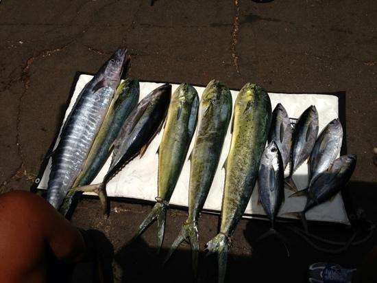 Aerial Sport Fishing Charters: Ono, Mahi Mahi, and tuna