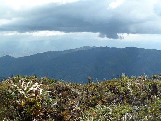 Podocarpus National Park: Cajanuma: shrubby Paramó on the crest line at 3400 m a.s.l.