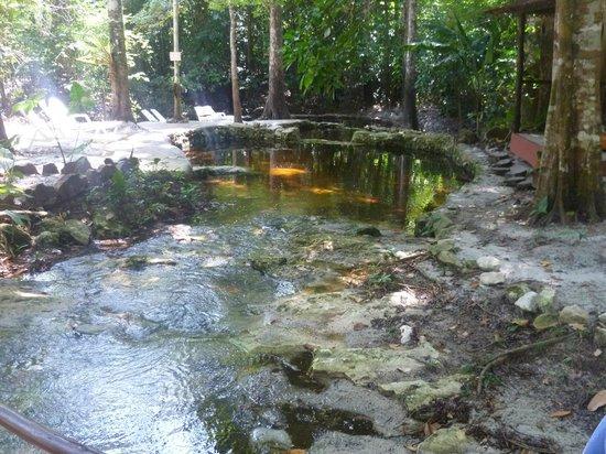 Amazon Ecopark Jungle Lodge: piscina