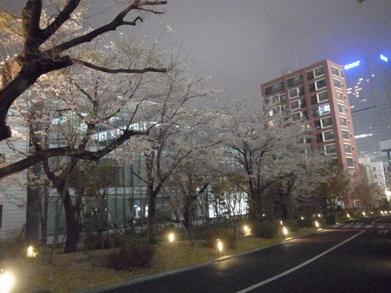 akasaka Sacas: 坂の上から一つ木通り方面に向かう桜並木