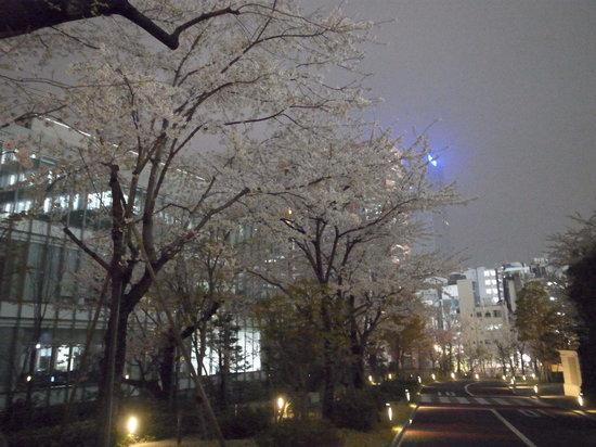 akasaka Sacas: 一つ木通り方面に向かう桜並木