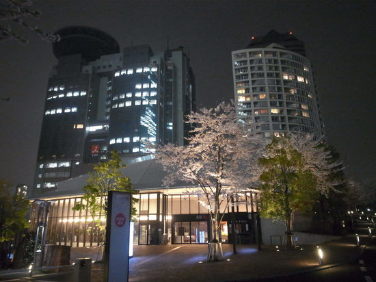 akasaka Sacas: TBSと桜