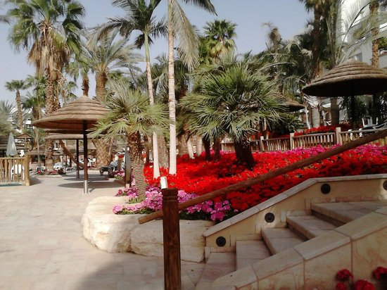 Isrotel Royal Garden : Яркие клумбы на территории отеля