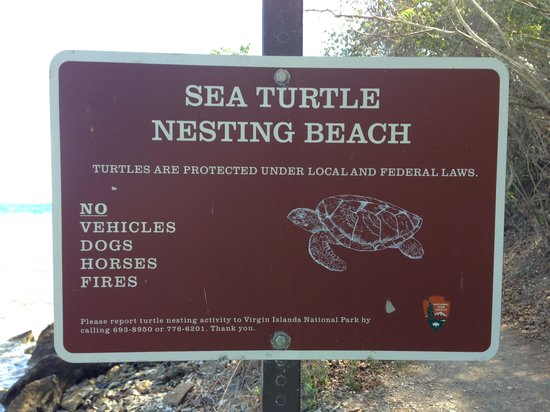 Sea Turtle Sign at Leinster Bay