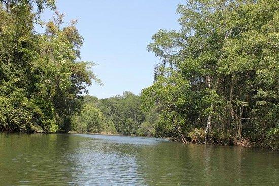 Finca Buena Vista: Der eindrucksvolle Mangrovenwald