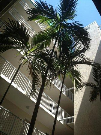 Sand Pebble Resort: Courtyard Palm Trees