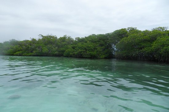 Aleli Tours - Day Tours: Close to the reef. Excellent swimming/snorkeling