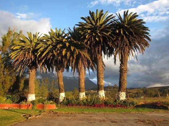 Hosteria Oro Azul: Die Palmen im Garten