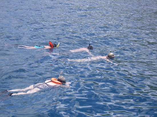 Kekoa Sailing Expeditions: Snorkeling - Viewing turtles, rays, and fish