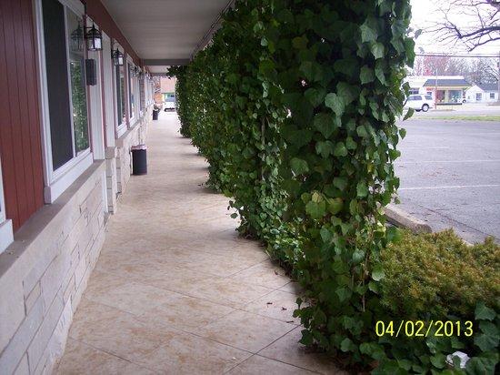 Murray Plaza Lodge : Growing pillars everywhere!