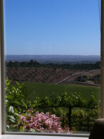 Seven Quails Vineyards Bed & Breakfast: View from the breakfast window