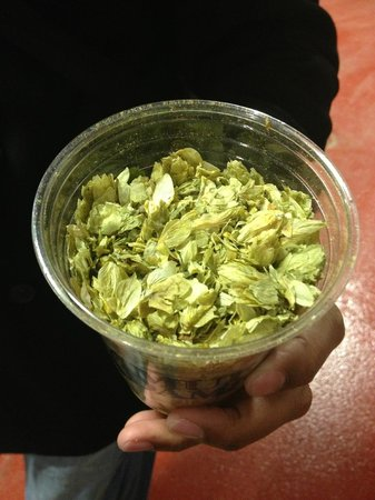Samuel Adams Brewery : Hops