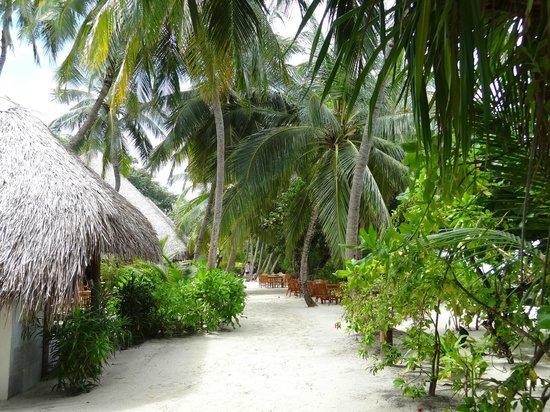 Kuramathi Island Resort: L'île