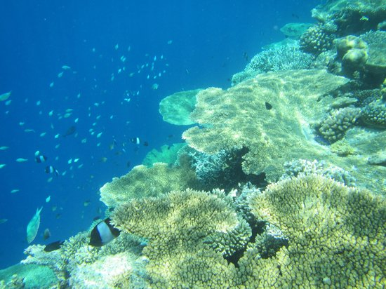 Vilamendhoo Island Resort & Spa: coral reef