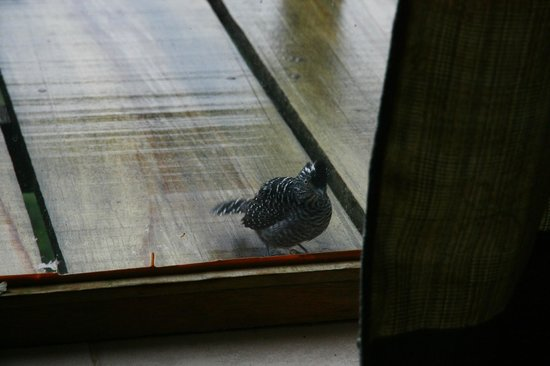 Finca Integral Dikla: Bird knocking at the window to wake you up in the morning :)