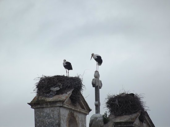Hotel Sol Algarve: View of the storks from the balcony