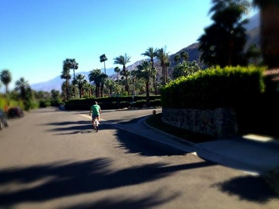 Orbit In: Biking through Palm Springs
