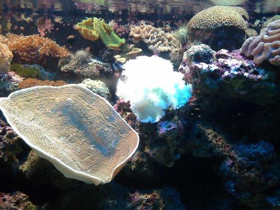 ... fish - Picture of Underwater World Langkawi, Langkawi - TripAdvisor
