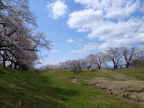 Shiroishigawa Embankment Hitome Sembonzakura: のどかな風景もあります