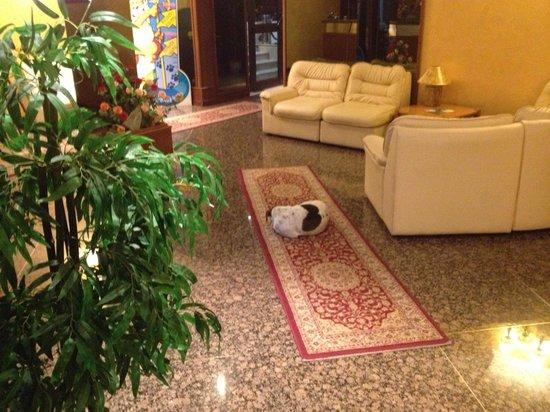 Hotel Squarciarelli: Cane che dorme nella hall