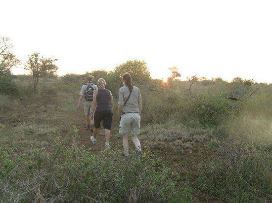 White Elephant Safari Lodge: en suivant les traces des éléphants