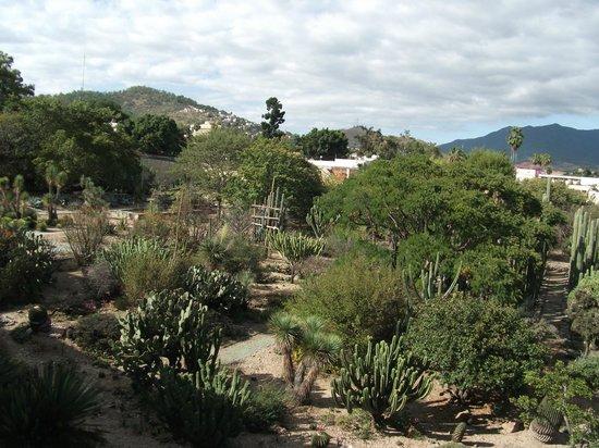 Museo de las Culturas de Oaxaca: Botanic Gardens