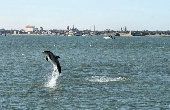 Dolphin Water Tours LLC : Show off....