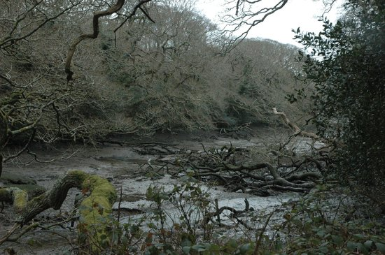 Cornish Seal Sanctuary: A valley with the otters enclosure