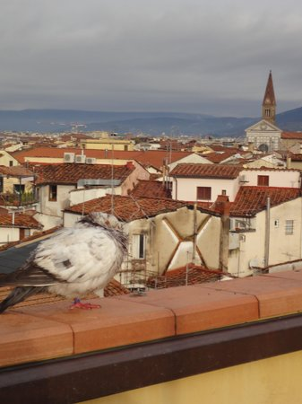 Hotel Tornabuoni Beacci: テラスとハト