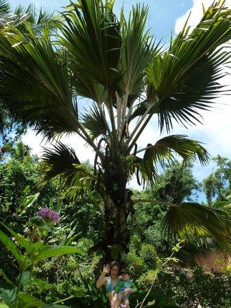 Cote Sud: jardin