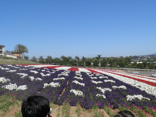 Carlsbad Flower Fields: American Flag