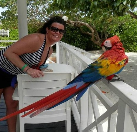 Grand Bahia Principe Jamaica: My wife and the parrot residing at the bar by the nude beach.