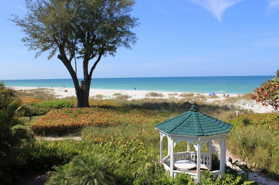 Harrington House Beachfront Bed & Breakfast : Beach view - I love that tree