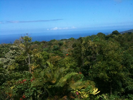 South Kona Hideaway : Beautiful morning view