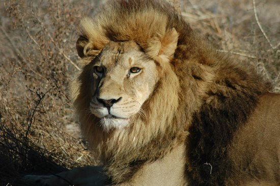Drakenstein Lion Park: Hairdressing specialists