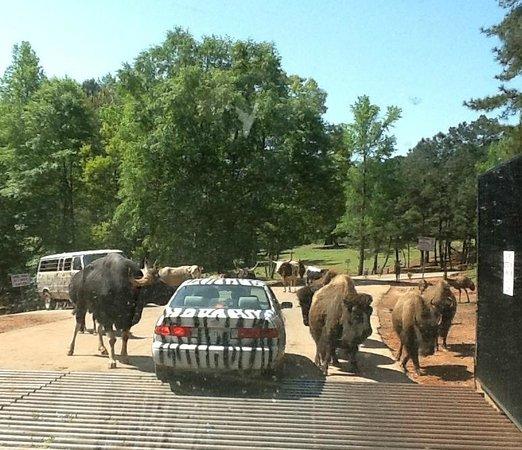 Safari Tour In Georgia