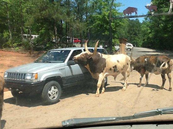 Wild Animal Safari: Pay the extra $15 to rent the van