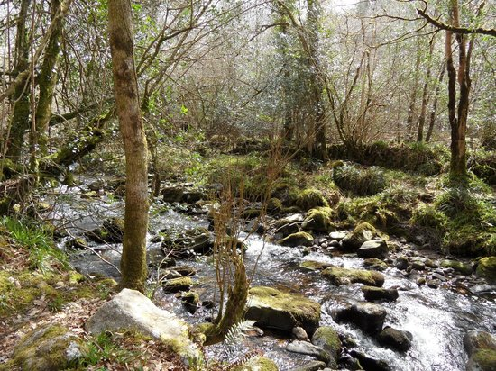 Carey's Castle : Glenary Stream