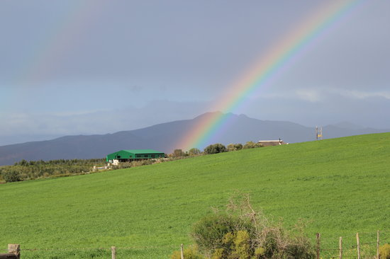 Marbrin Olive Farm: Liquid gold at the end of the rainbow